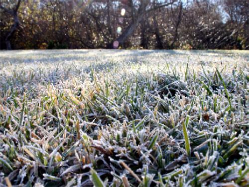 как готовить газон к зиме